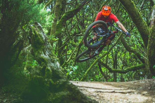 Im Wald El Brezal