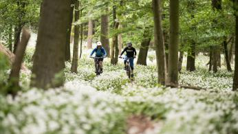 Endspurt: Streckennetz Wienerwald