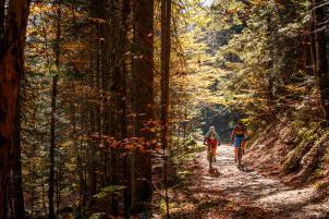 Herbstlicht-Plus: