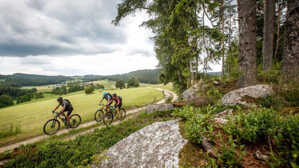Rückkehr: Waldviertler Granittrail